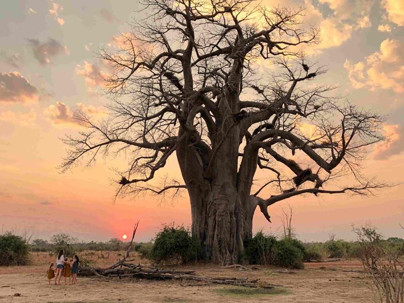 Safari : un séjour Out of Africa en famille en Zambie