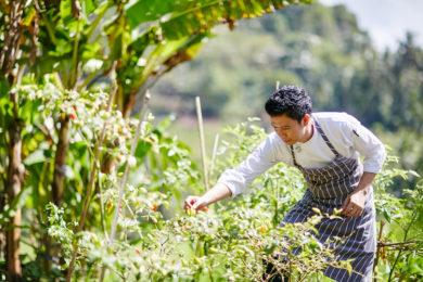 Alila Manggis jardinier