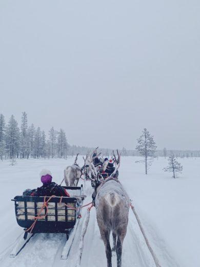 Laponie-neige-rennes