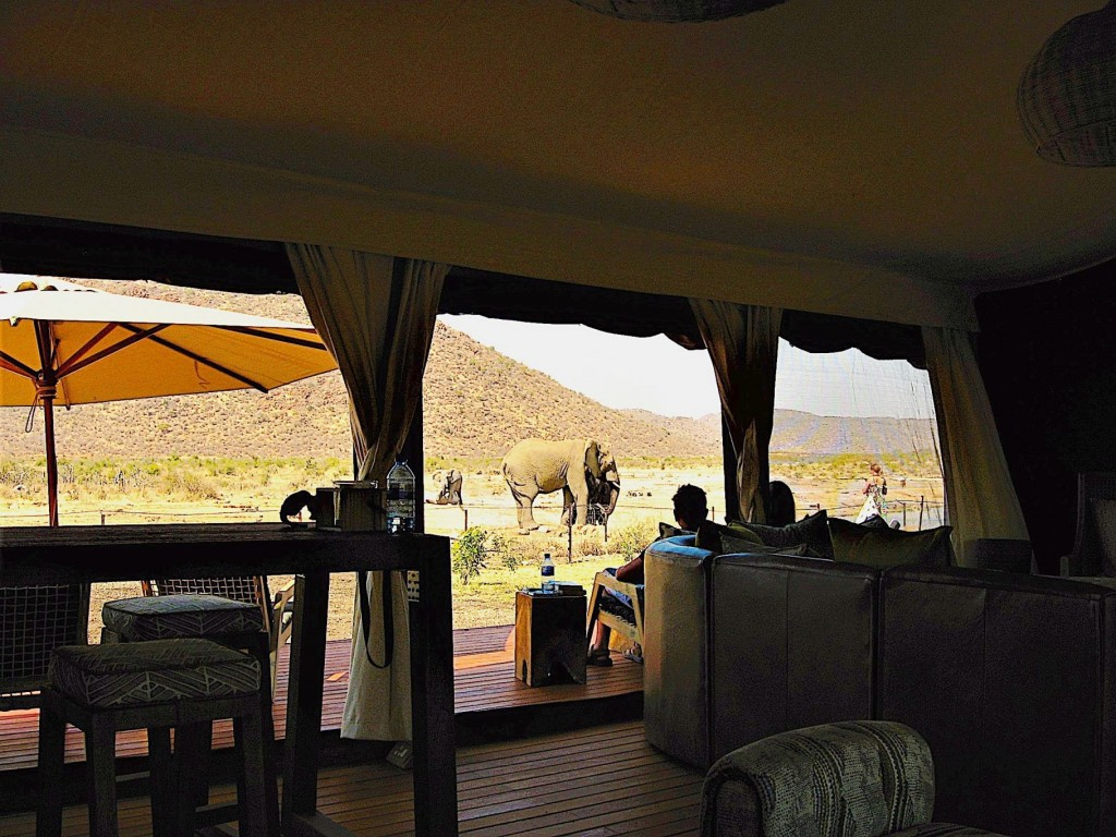 Madikwe TAU Game Lodge 1