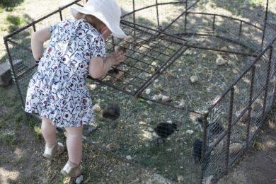 Salföld Manor ferme animaux